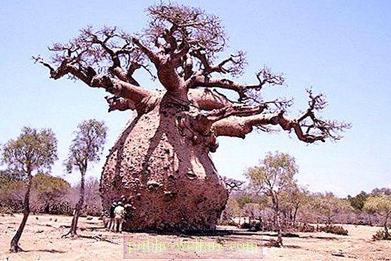 Unusual Tree Backgrounds