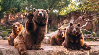 Bear, Natural, Tree, Wallpaper, Widescreen
