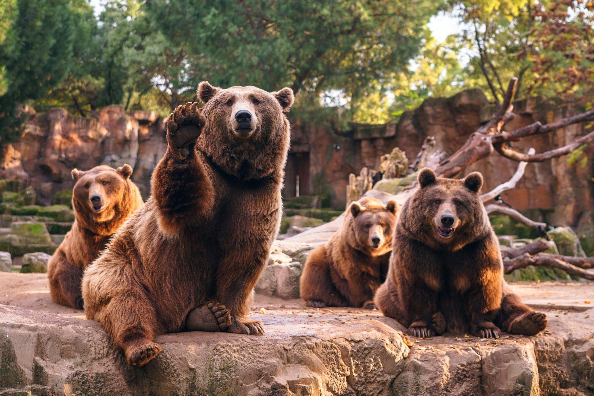 Bear Backgrounds
