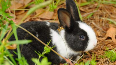 Bunnies, Cute, Filed, Green, Image, Widescreen
