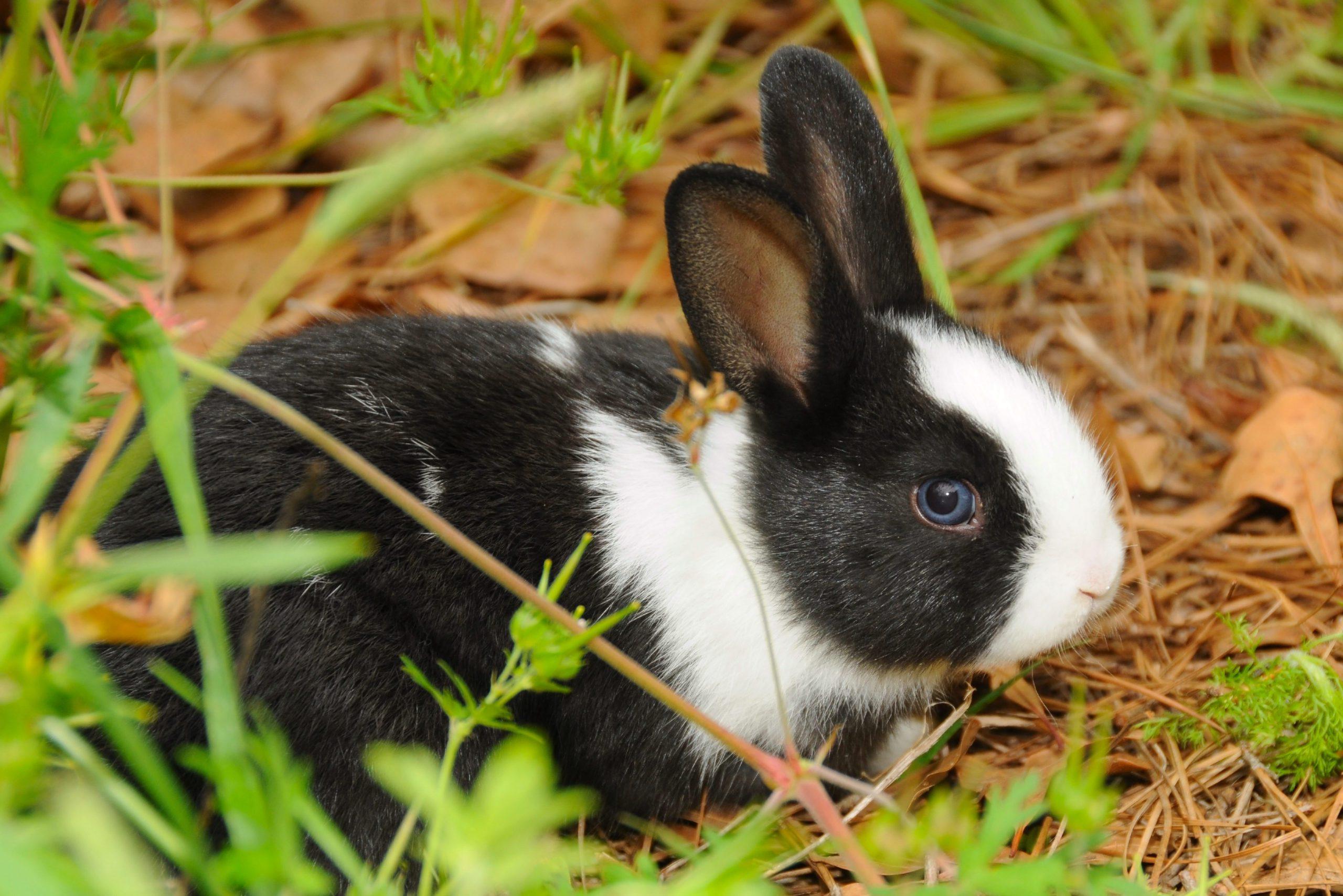 Cute Bunnies Image