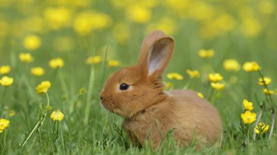 Beautiful, Bunnies, Cute, Field, Green, Image