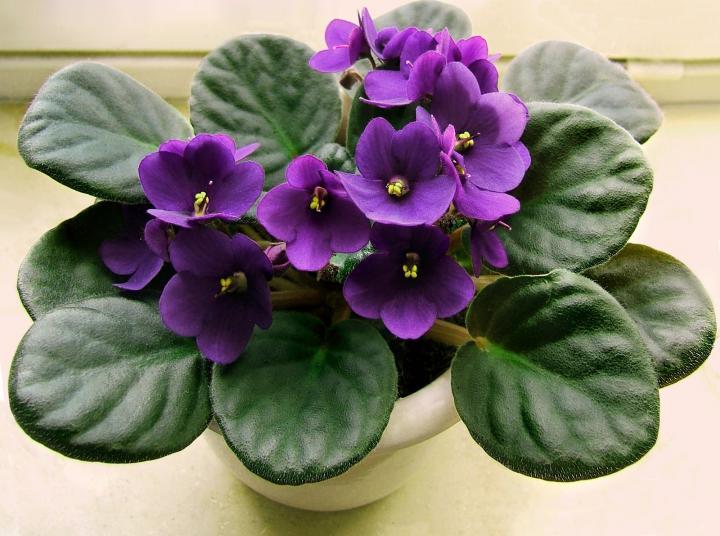 Violet Flower Photo