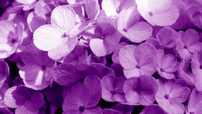 Awesome, Flower, Image, Natural, Purple, Violet