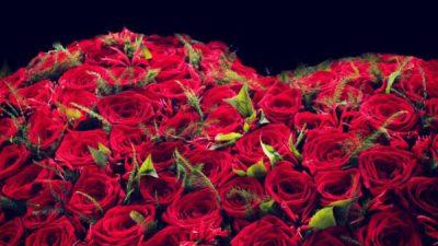 Desktop, Natural, Photo, Red, Roses, Top