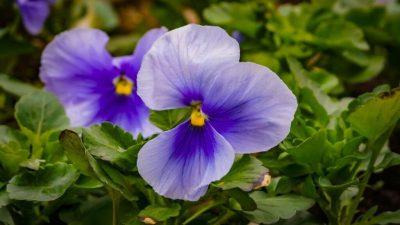 Flower, Green, Landscape, Nature, Tree, Violet
