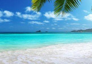 Palm, Seaside, Tree, Wallpaper