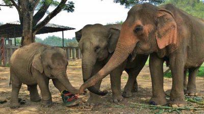 Elephant, Image, Nature, Three, Widescreen
