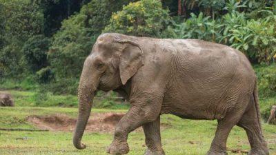 Elephant, Garden, In, Walking, Wallpaper