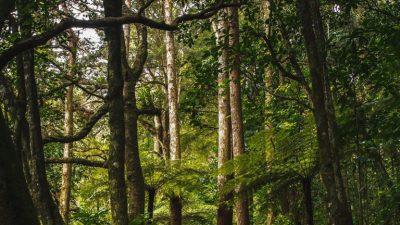 Beautiful, Green, Jungle, Natural, Tree, Wallpaper