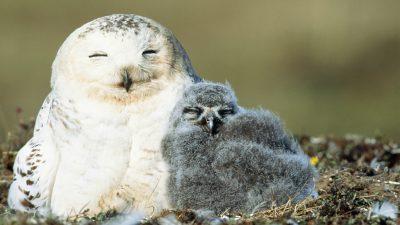 Image, Landscape, Natural, Owl, White