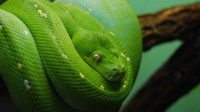 Best, Green, Image, Natural, Snake