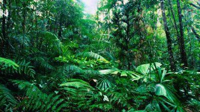 Awesome, Beautiful, Jungle, Wallpaper