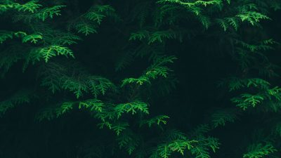 Beautiful, Desktop, Green, Natural, Tree, Wallpaper
