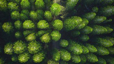 Desktop, Green, Natural, Wallpaper, Widescreen
