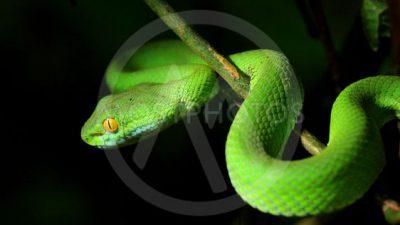 Green, Image, Natural, Snake, Widescreen