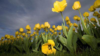 Flower, Image, Natural, Season, Spring, Yellow